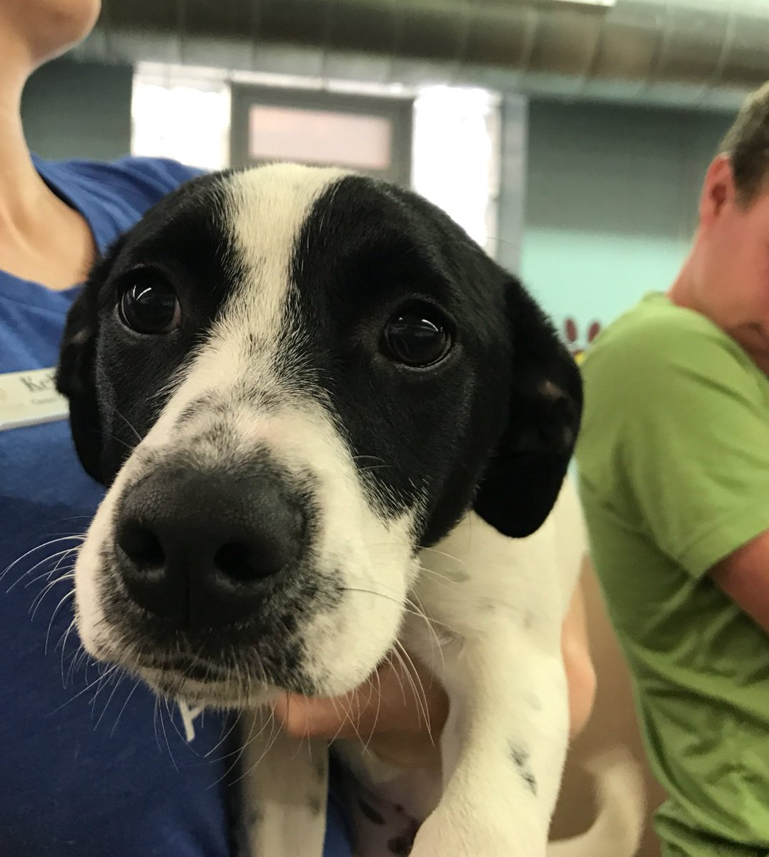 6-month-old Petunia is looking for a home this #MemorialDayWeekend great specials on all pets. @Providence_AC https://t.co/fH1D2aUnu3