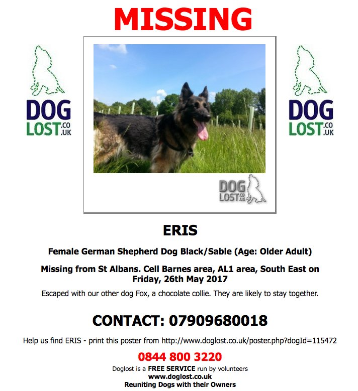 #LOST ERIS Female #GermanShepherd #Dog - MISSING WITH FOX  #CellBarnes #StAlbans #AL1 #Lostdog  http://www. doglost.co.uk/dog-blog.php?d ogId=115472#.WSiV_BMrLOY &nbsp; … <br>http://pic.twitter.com/vhlwela8EY