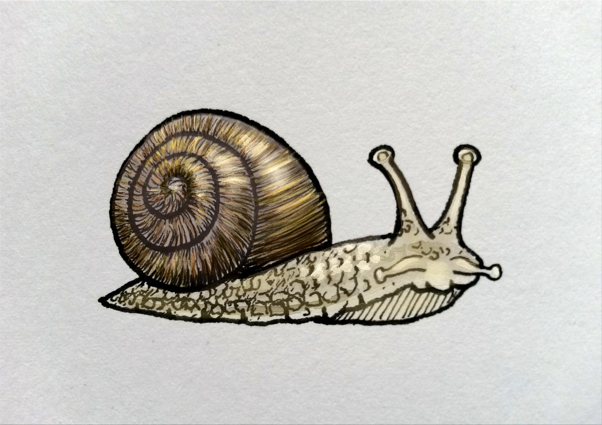 A late #wenge #colour_collective - wasn&#39;t sure how to use to colour, so coloured my #snail from #inktober. #illustration <br>http://pic.twitter.com/OzugUNnmrN