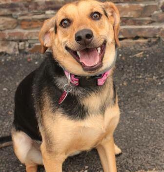With the smile of a rockstar, Autumn will have NO FEE this weekend, as well as all pets homeless 30+ days! https://t.co/Q4Fzg7XQjj