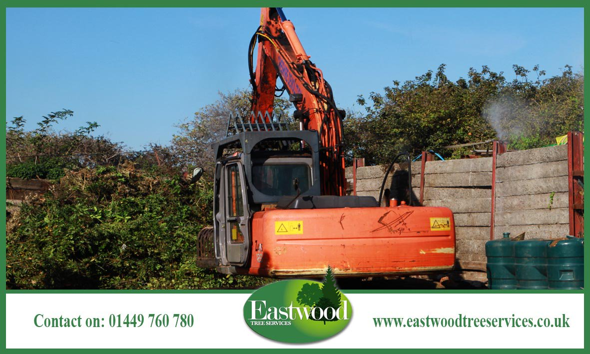 #Landowners, click here for #TreeConsultancy services in #Eastwood &gt;&gt;&gt;  http:// bit.ly/EastwoodTreeSe rvicesConsultancy &nbsp; … <br>http://pic.twitter.com/bWFLPXg1ar