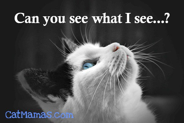 We know that #cats see a lot more than we do ... but you have to wonder exactly WHAT they&#39;re gazing at sometimes! #kitty #animalspirit<br>http://pic.twitter.com/gyACgqcjjS