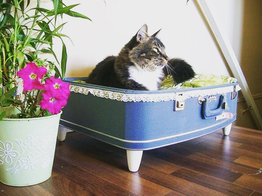 Cat bed: A great use for old luggage found at our estate sale. #repurposed #estatesale #estate #cat #catbed #luggage #doityourself #recycle<br>http://pic.twitter.com/lYkT3XJGVW