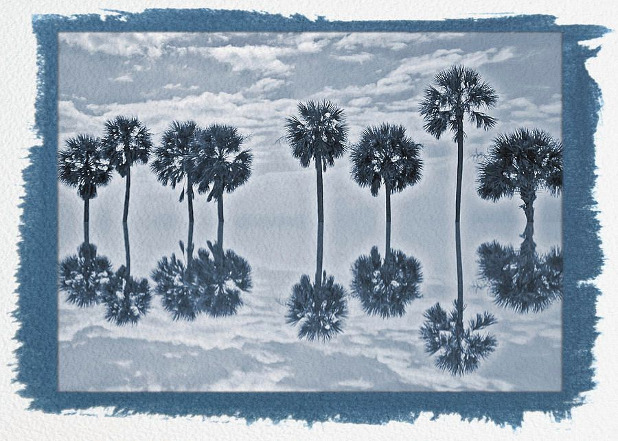 Painted Cyanotype Palm Tree Reflection by Aimee L Maher Photography  http:// buff.ly/2rj9NYg  &nbsp;   #palmtrees #wallart #giftsideas #interiordesign<br>http://pic.twitter.com/0EGM1SyktW