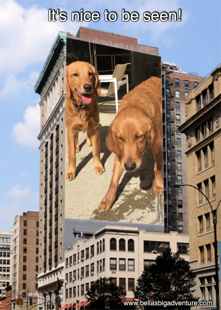 Would you subscribe &amp; follow our #video_blog @  http://www. bellasbigadventure.com  &nbsp;    #dogs #puppy #golden_retriever #travel #adventure #America #animals<br>http://pic.twitter.com/TNl6FWLSXS
