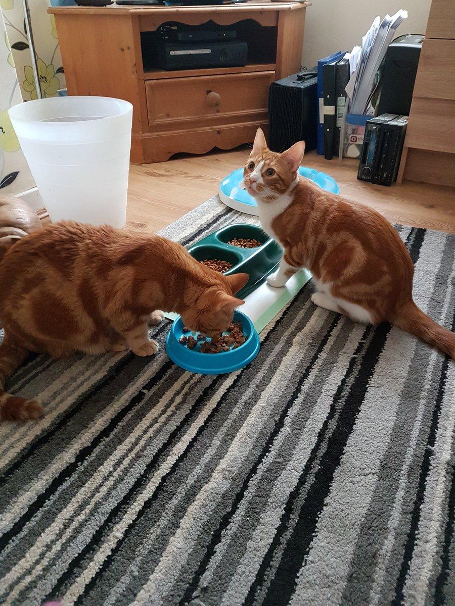 Bweakfast wid Alfie #Caturday <br>http://pic.twitter.com/LH5ppyXtop