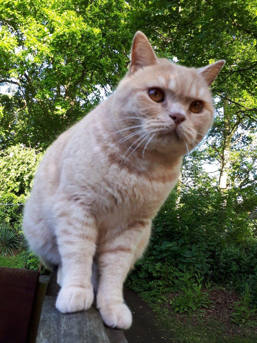 #Caturday pawtrol purrveillance  <br>http://pic.twitter.com/WAjwrdqg47