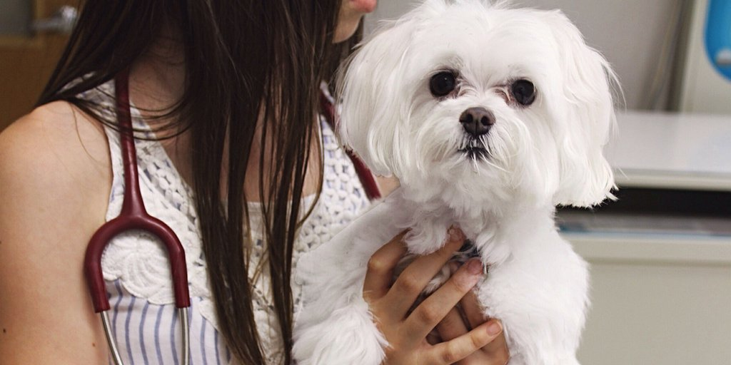 9 Things You Need To Know To Protect Your Pets From The #DogFlu Outbreak