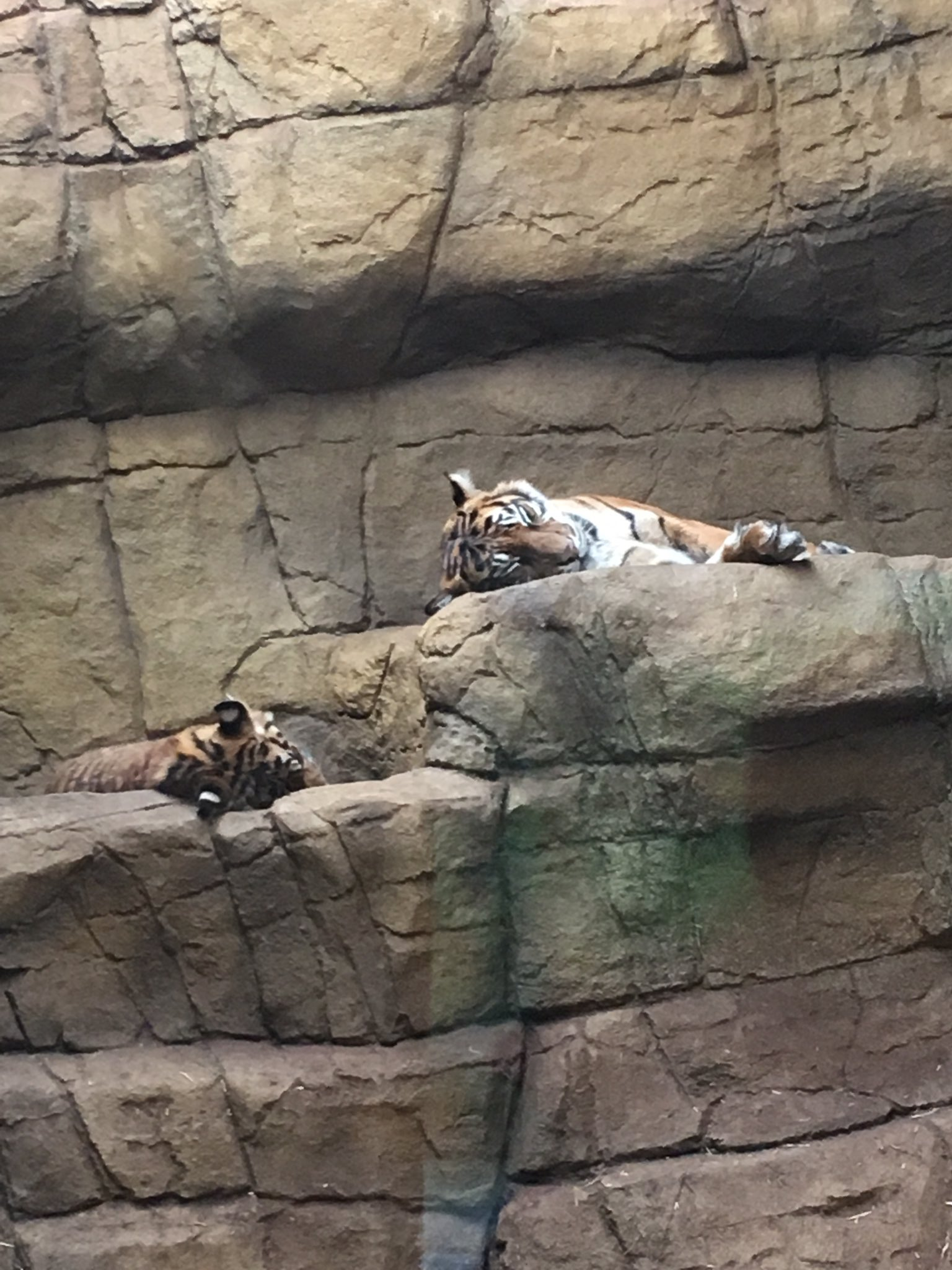 Day 8 of #30DaysWild, loving today's updates from #rainforestlive, stepped out find these beautiful guys napping @OfficialZSL @BorneoNature https://t.co/3UfdwcpmYo