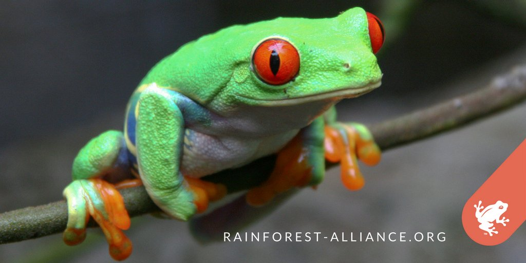 Keeping forests standing is an important way to conserve #biodiversity. Learn about our approach: https://t.co/QmirP5JA80 #RainforestLive https://t.co/Vwi7a6hVPy