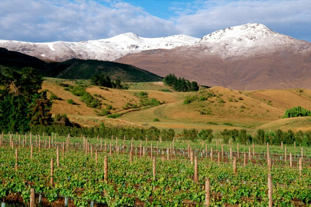 Grown in the three main valleys of Central Otago, New Zealand @TwoPaddocks produces pinot noir &amp; riesling #NZwines  http:// bit.ly/2rKn6Ba  &nbsp;  <br>http://pic.twitter.com/BCXV8oAfOb