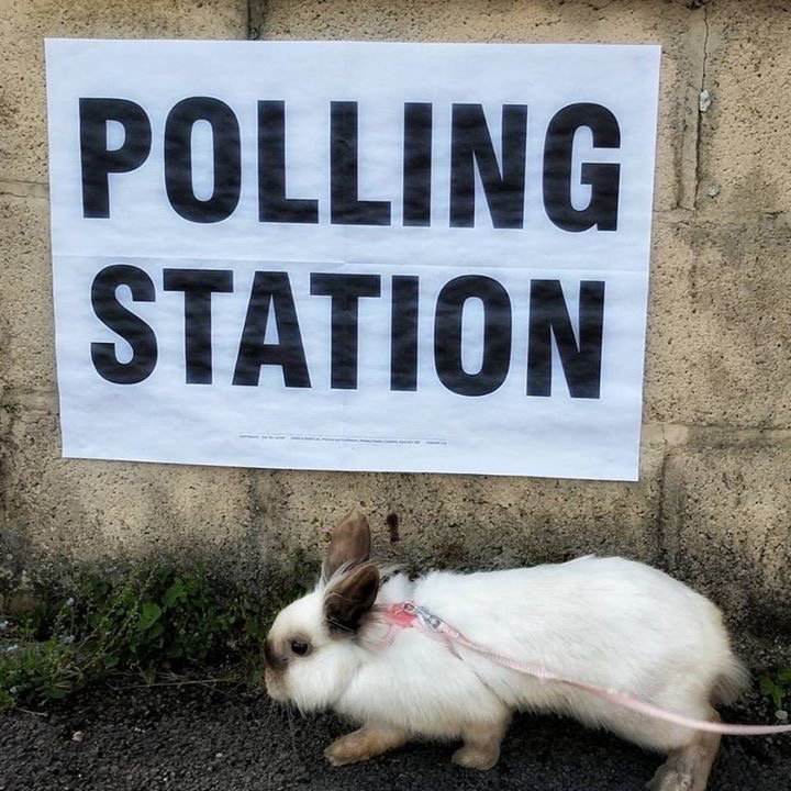Thumbnail for Peculiar pets at polling station