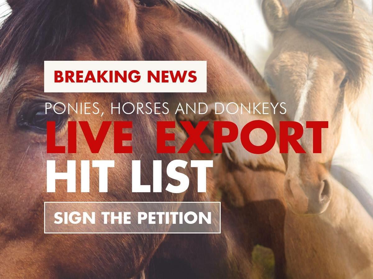 BREAKING: Australian ponies, horses and donkeys next on live export hit list. Sign now at https://t.co/CtfEkLk2RV https://t.co/FqczOgXQ0p