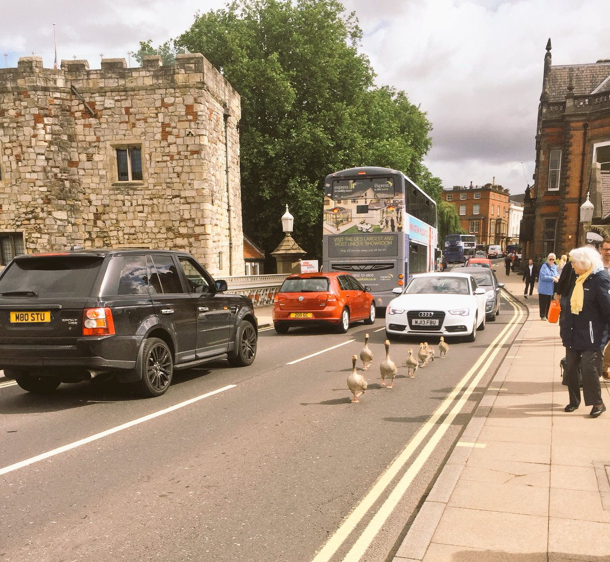 Now that's what I call leadership....these birds absolutely bossing it down the main road through York. https://t.co/kzQ5zs5Tmq