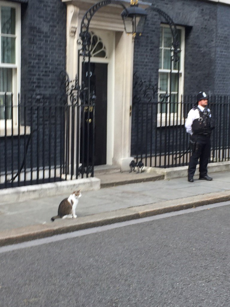 CONFIRMED @Number10cat Larry stays in post https://t.co/AFAVoWXTZz