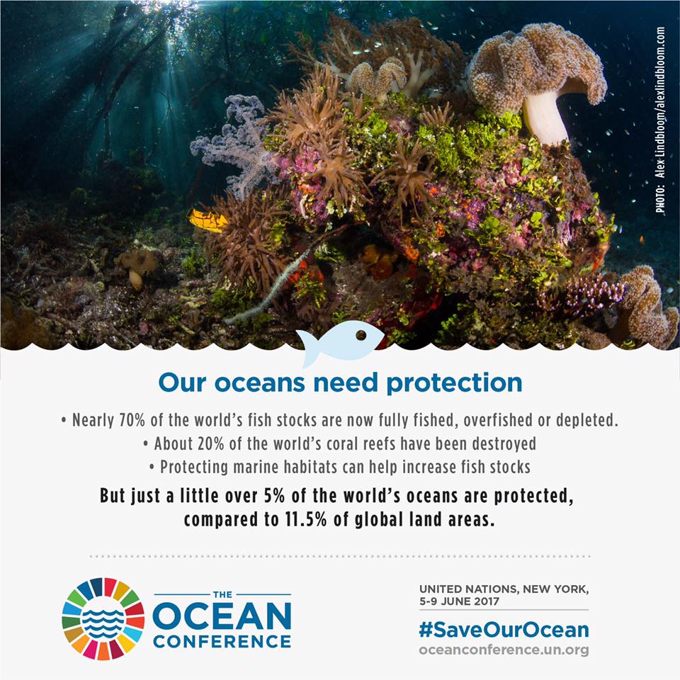 how the oceans can feed the world Oceans cover 71% of the planet and are the source of life on earth over a billion people, including some of the poorest in the world, depend on the oceans and wild seafood for survival.