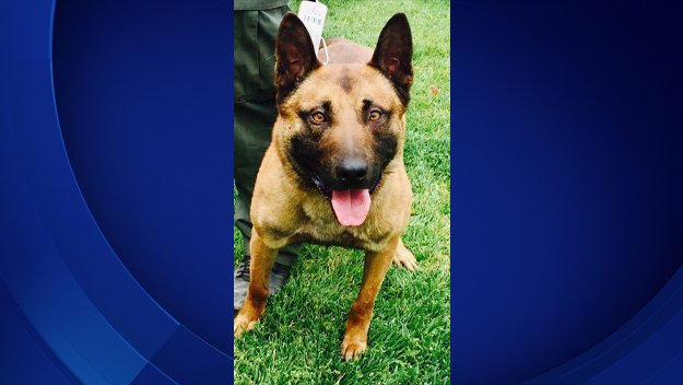 OC Sheriff's Need Public's Help To Name New K-9 Officer http://cbsloc.al/2snRQb5