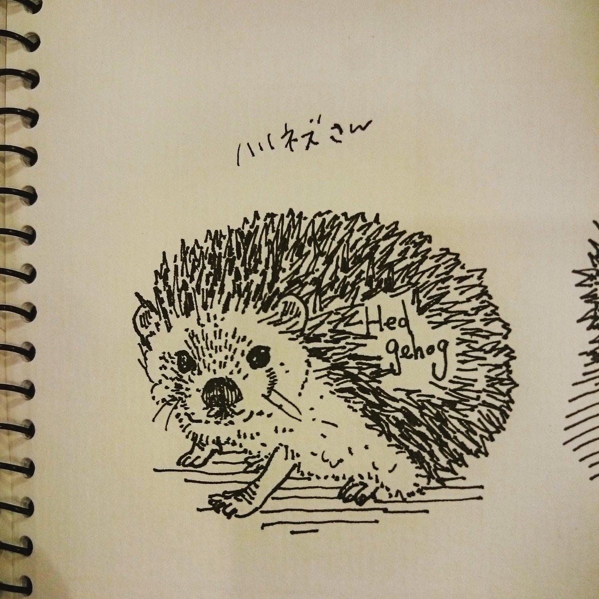 """スフィンクスゆかり@デザフェスg462 on twitter: """"習作のメンフクロウ"""