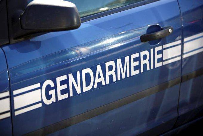 🇫🇷 #Gers Un commando bien renseigné dérobe 12 chiots de race chez un éleveur. https://t.co/9HWmlOlkjz