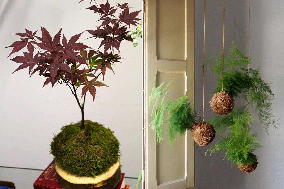 Sin maceta y con forma de bola la nueva forma de tener plantas en casa se llama 39 kokedama - La casa de la maceta ...