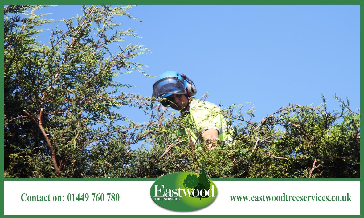 Click here to read about our #TreeCare services &gt;&gt;  http:// bit.ly/EastwoodTreeSe rvicesSurgery &nbsp; …  #Eastwood #TreeSurgery<br>http://pic.twitter.com/4TPCz2PJGR