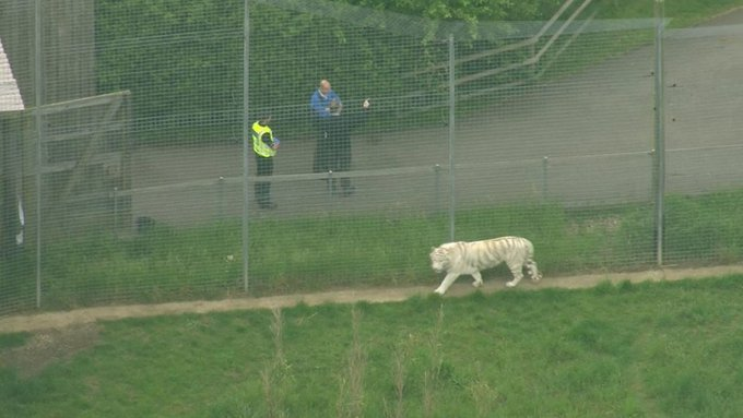 Zookeeper killed by tiger in enclosure at Hamerton Zoo Park in England https://t.co/P31jG6bO2z