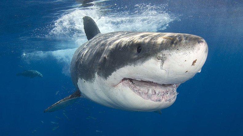 тихий океан фото акула