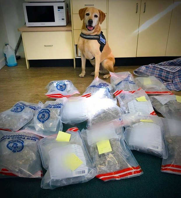 29-year-old man charged after 14 kilograms of cannabis found in his van near the QLD and NSW border. https://t.co/J6qj9v9JgN #7News
