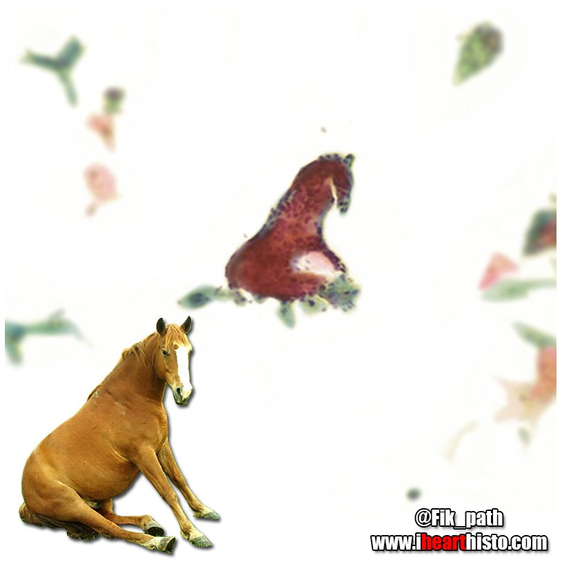 Horse Pap  Today I saw a tiny horse sitting in a Pap smear - @Fik_path #histology #pathology #pathArt #science #ihearthisto<br>http://pic.twitter.com/fgZcd9PBA7