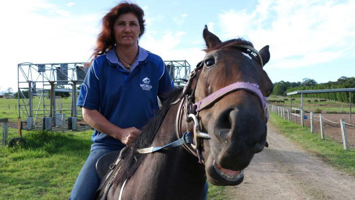 Lorna knowles on twitter abc exclusive horse trainers speak out 705 pm 29 may 2017 altavistaventures Gallery