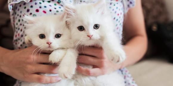 カラパイア : 猫をモフモフするだけの簡単なお仕事です。アイルランドの動物病院で一日中猫を撫でたり抱っこするスタッフを募集中 https://t.co/AiUC2EeDST