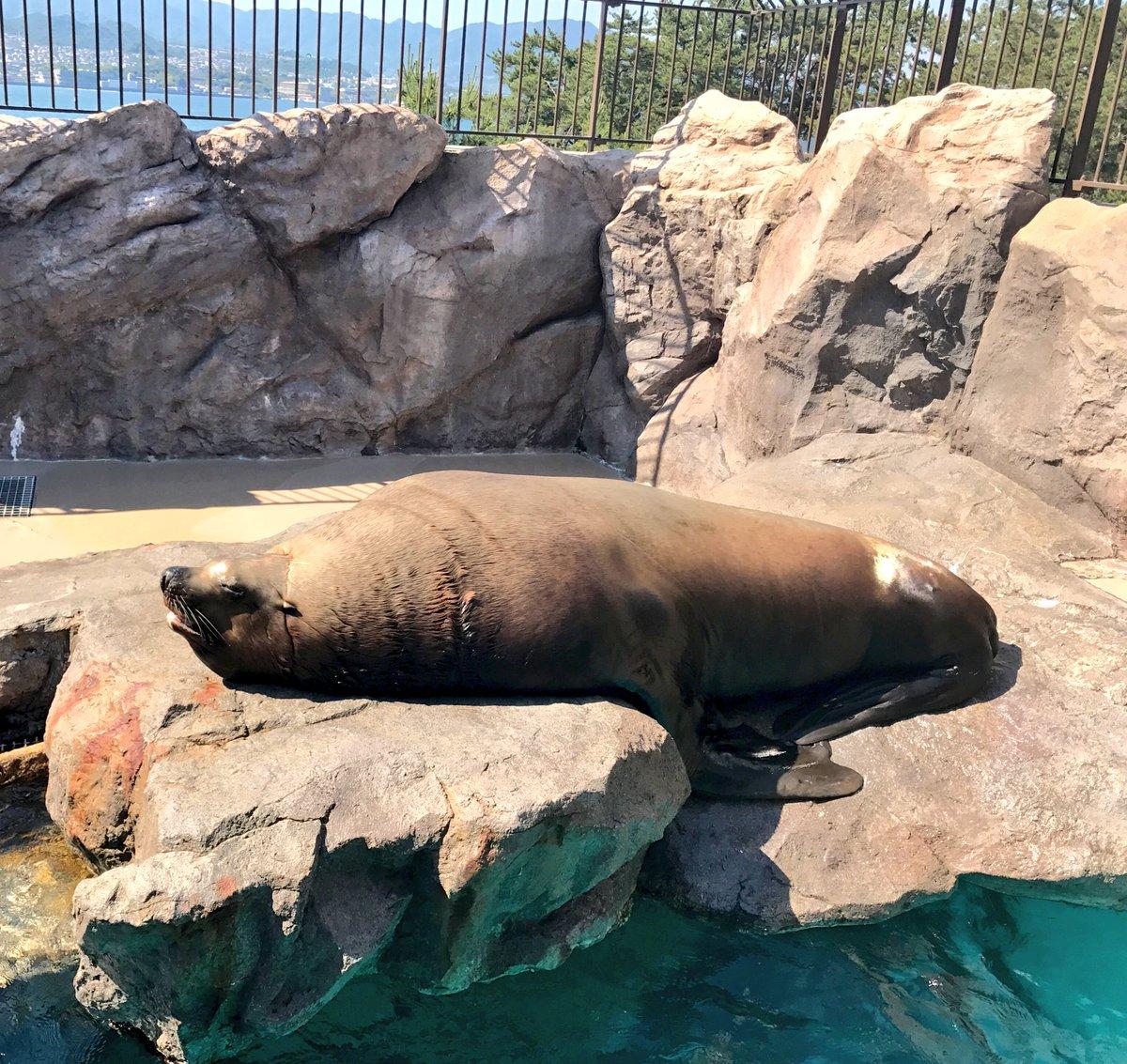 ねむねむねむ… この時間はなぜこんなに眠くなるのか… 頑張れ、わたし。 水族館で出会ったトドさん。 気持ちよさそう。わたしの抱き枕になってほしい。