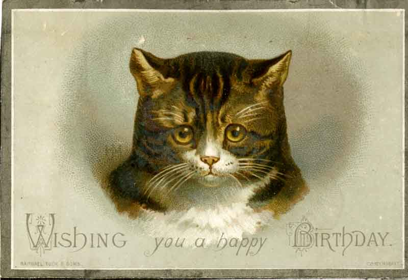 Sad birthday cat