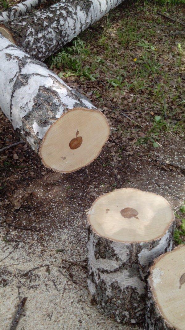 木を切ったらリンゴが出てきた