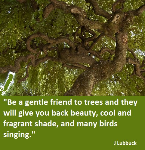 Environmental Quotes On Twitter Be A Gentle Friend To Trees And