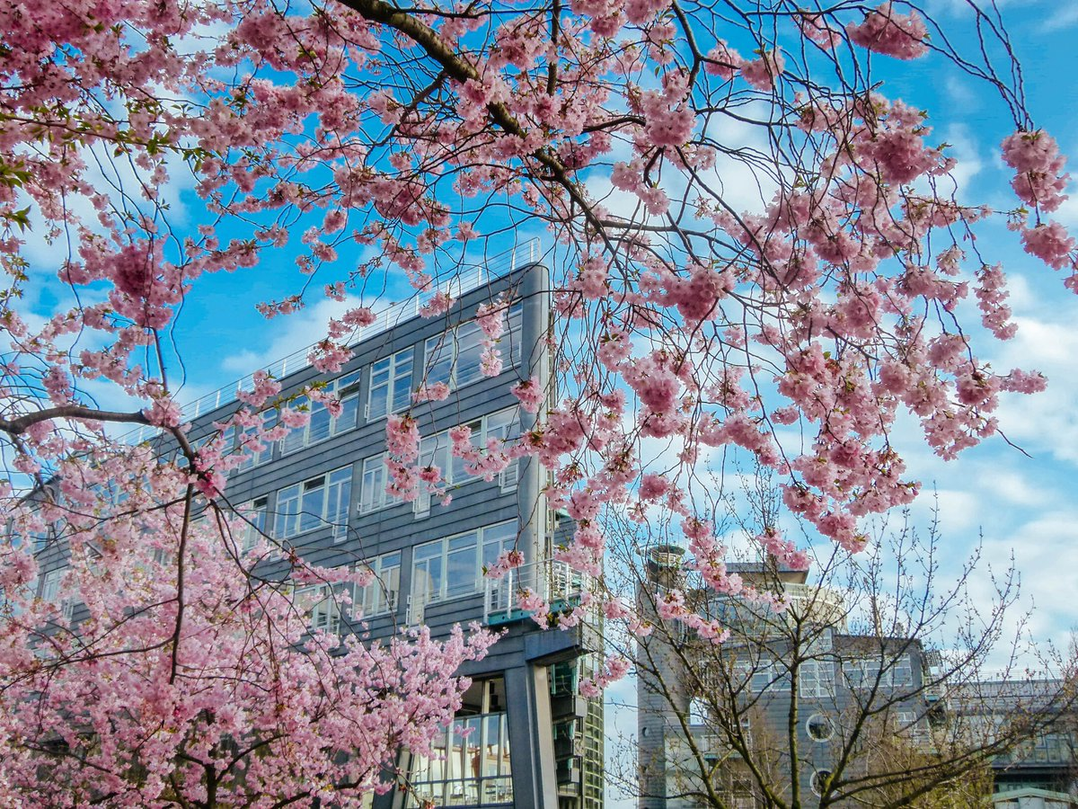 New on the Blog: How #Hamburg stole my heart!  http:// buff.ly/2rmfmoO  &nbsp;   #visithamburg @hamburgheute @GoVisitGermany<br>http://pic.twitter.com/M0fbI1fv2z
