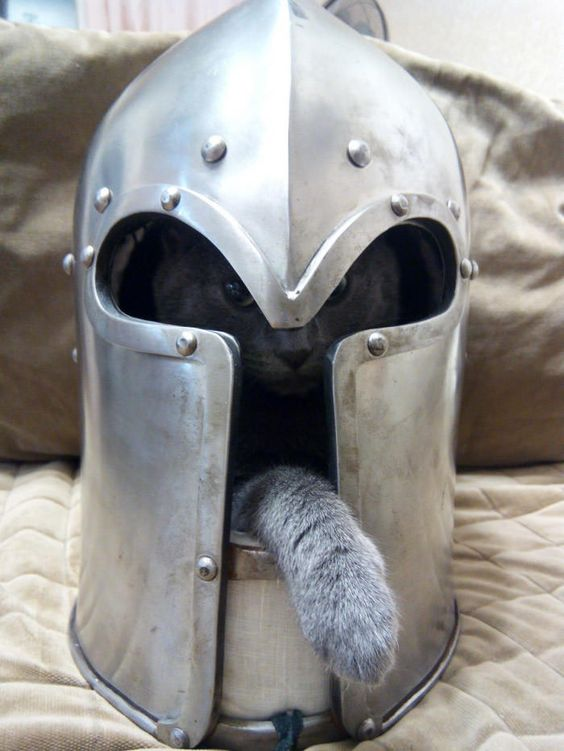 Helmet accompanied by a cat https://t.co/Pgnjyaxg10