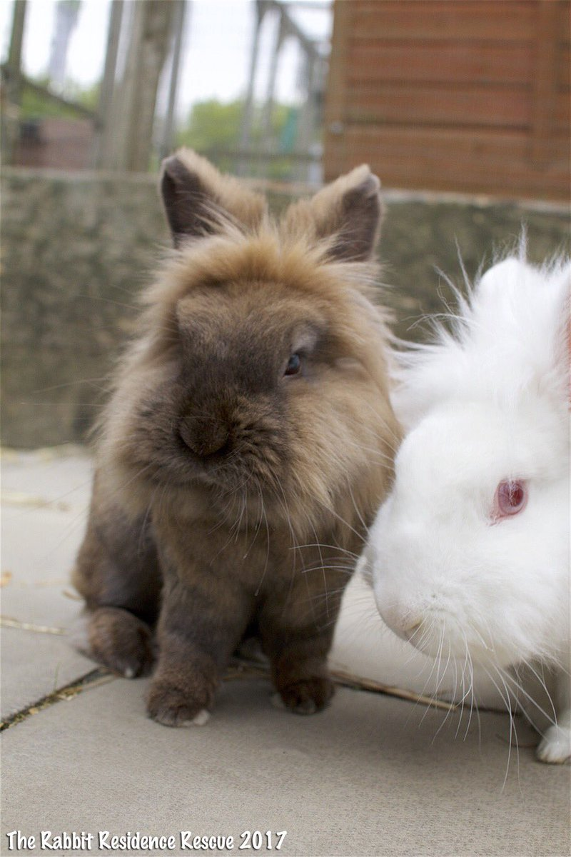 An you offer an unwanted bunny a home? Please share #rescuerabbit #ado...