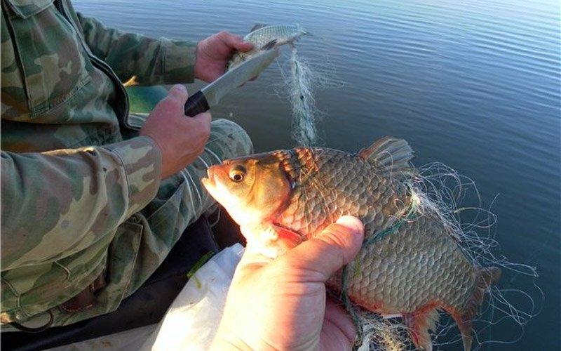 где сейчас ловят рыбу в ленобласти