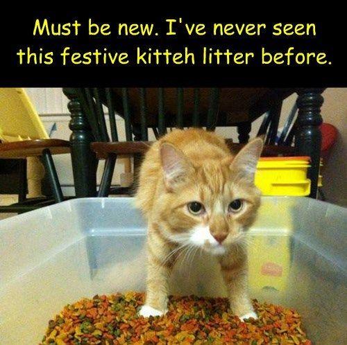 Cat Co Litter Bulk Suppliers