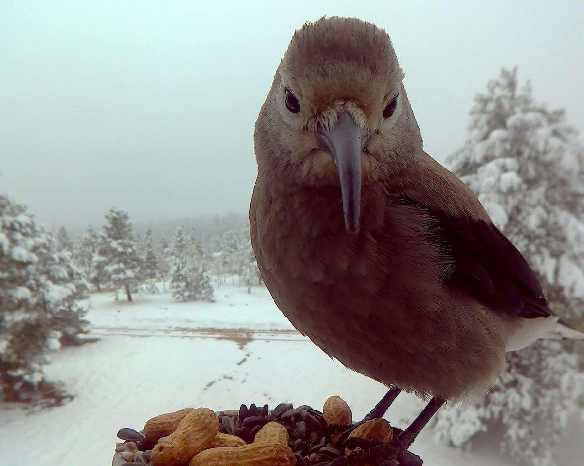 bird photo booth on twitter