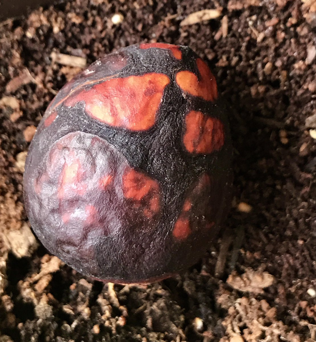 war dragons on twitter hold up real life dragon egg spotted