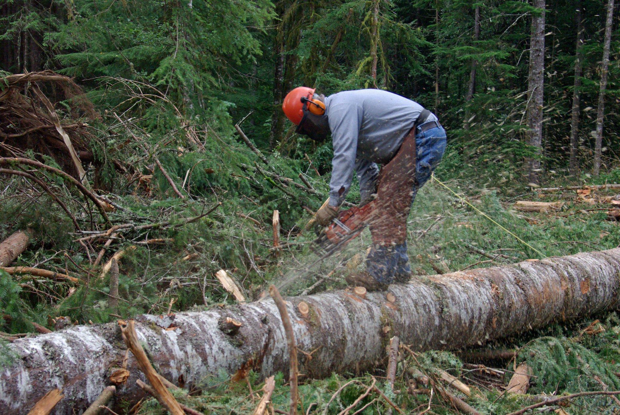 Картинки вырубка деревьев