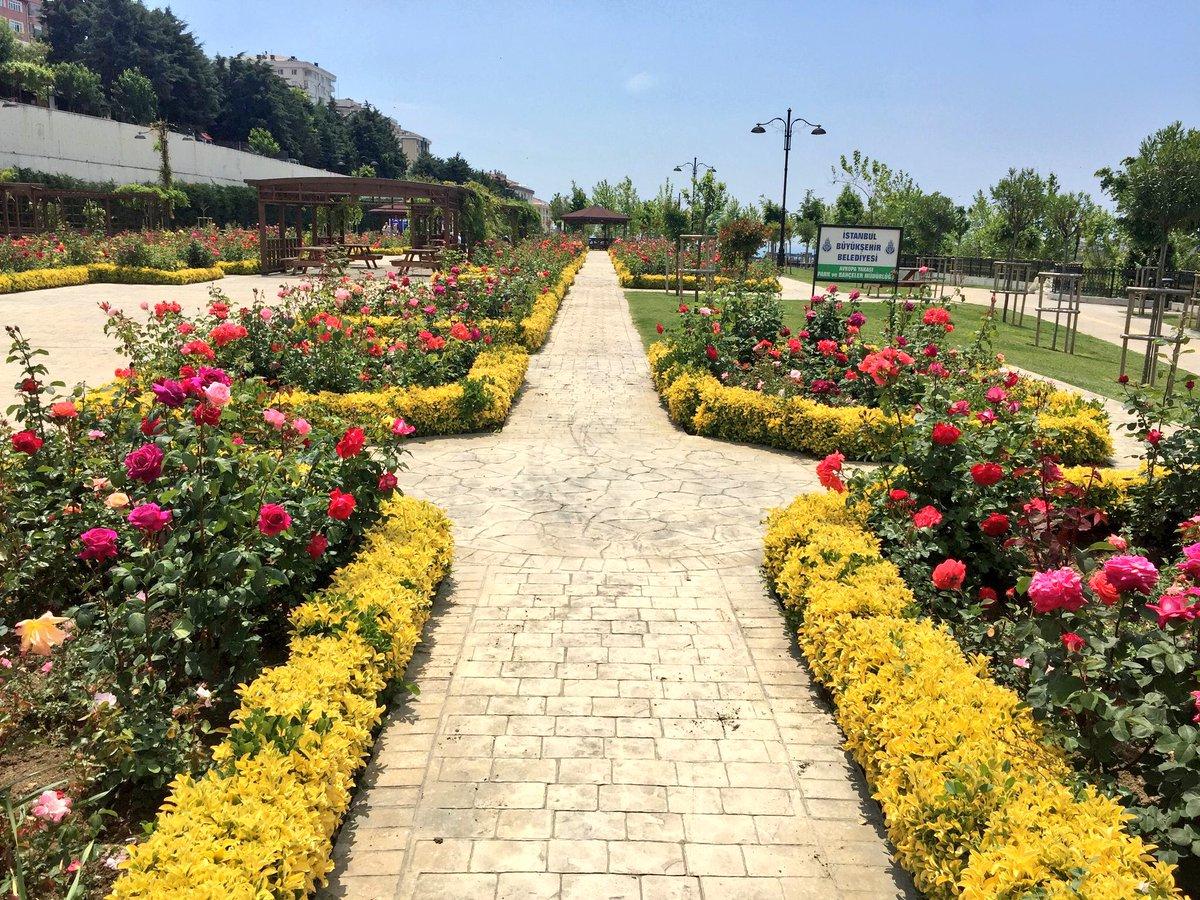 Park gülleri