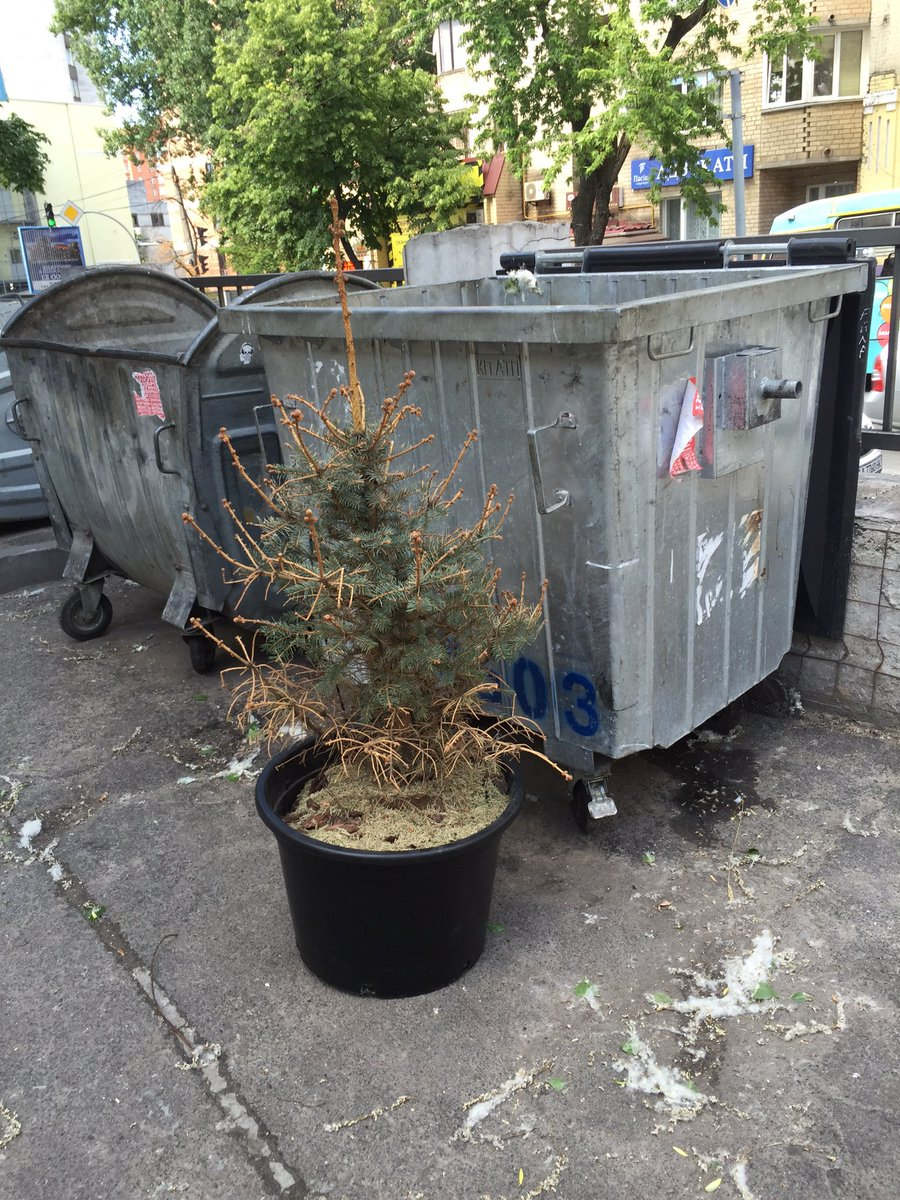 Someone from neighbors finally throw away Xmas tree ) it&#39;s just June , till next Xmas left only a bit, why he did it ?! #happynewyear2017 <br>http://pic.twitter.com/oYRlVVhru6