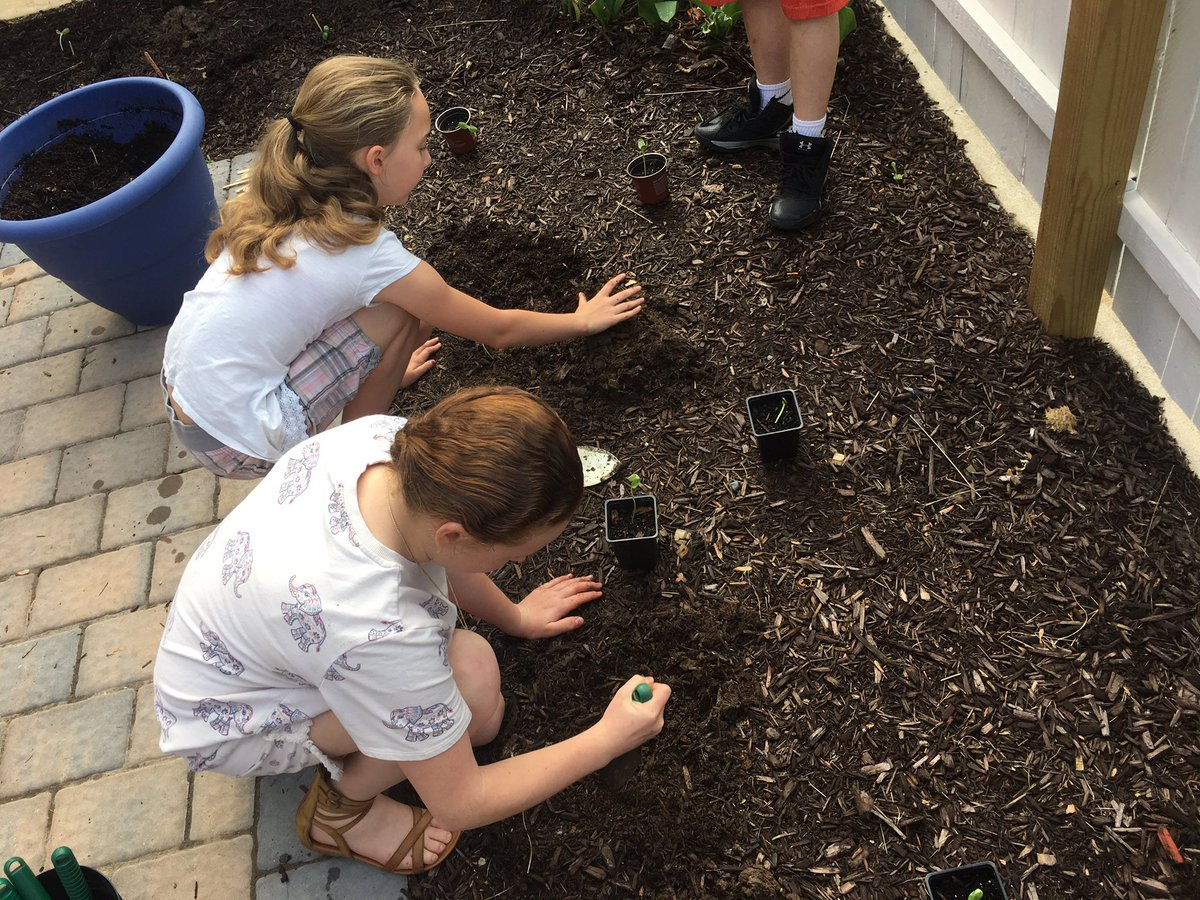 5th Gr Working In Schoolgarden Today Dirty Hands Hy Minds Scichat Outdoored Garden Teachersmatter Https T Co Exd3c4yn8a