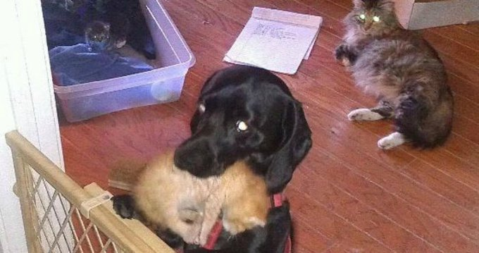 Dog Has An Unexpected Response To The Family Cat's 7 Newborn Kittens