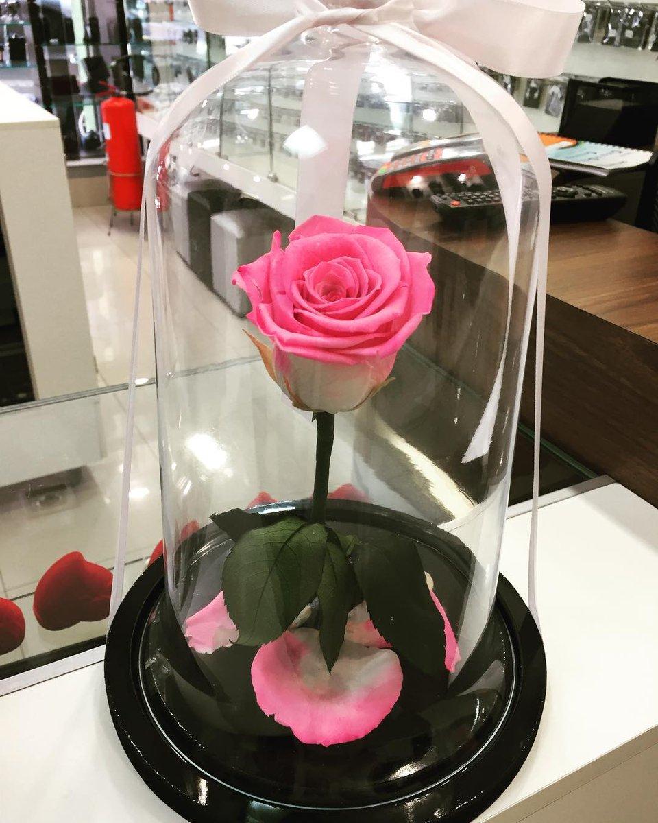 Resultado de imagem para rosa giuliana flores