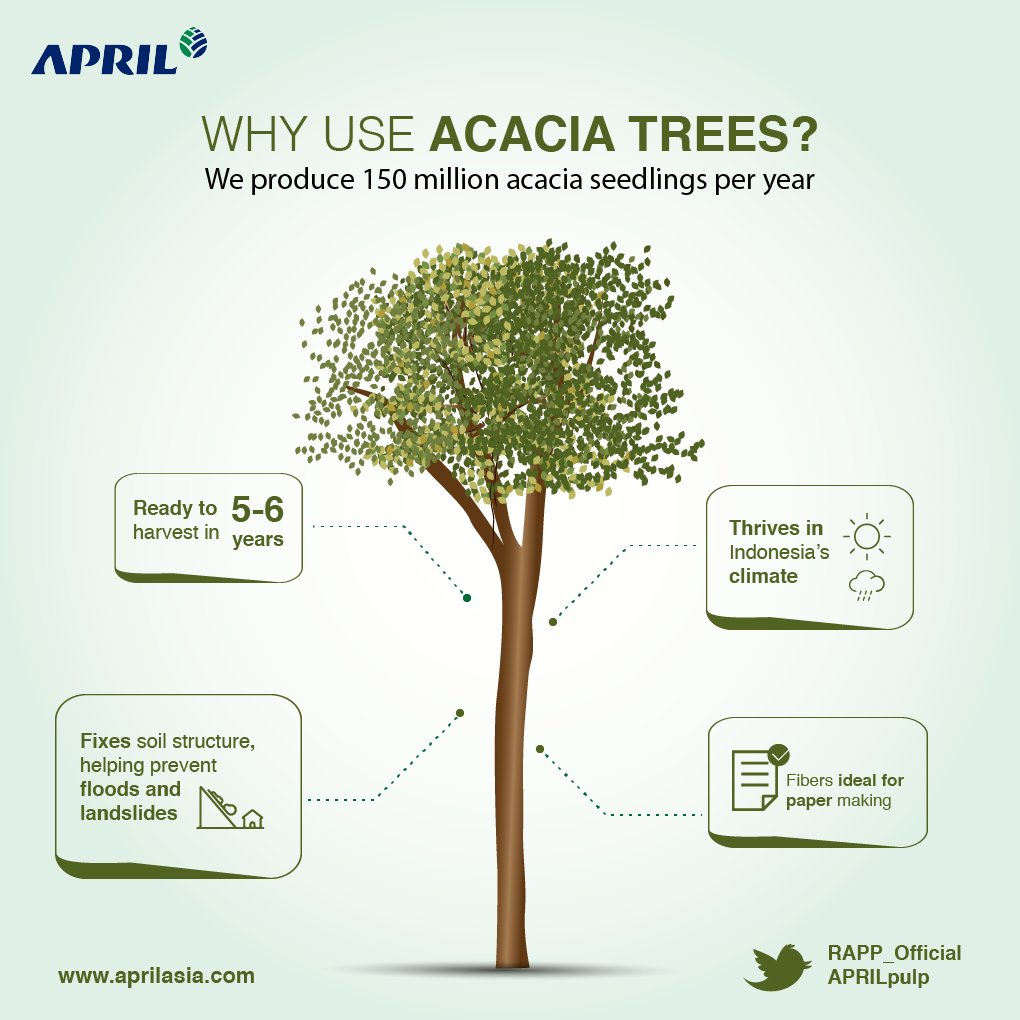 April Pulp And Paper On Twitter We Plant Millions Of Acacia Trees