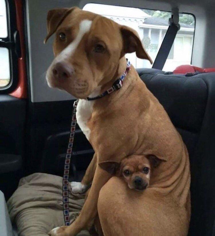 How cute!   http://www. bellasbigadventure.com  &nbsp;    #dog #dogs #puppy #puppies #animals #pets #travel #adventure #America #myfriend_Bella #journey #explore<br>http://pic.twitter.com/j8iBJNz0Hz